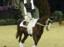 pferd und symphonie 2008